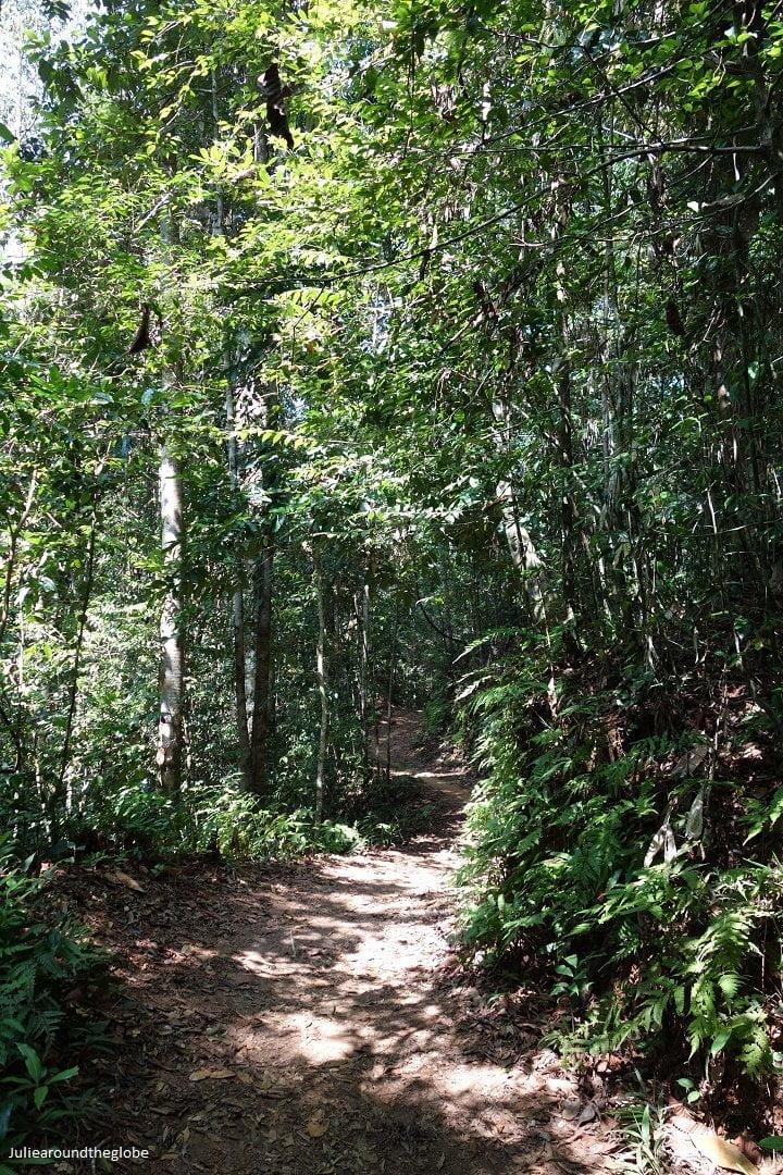 Deep into the jungle, Sinharaja Rain Forest, Sri Lanka