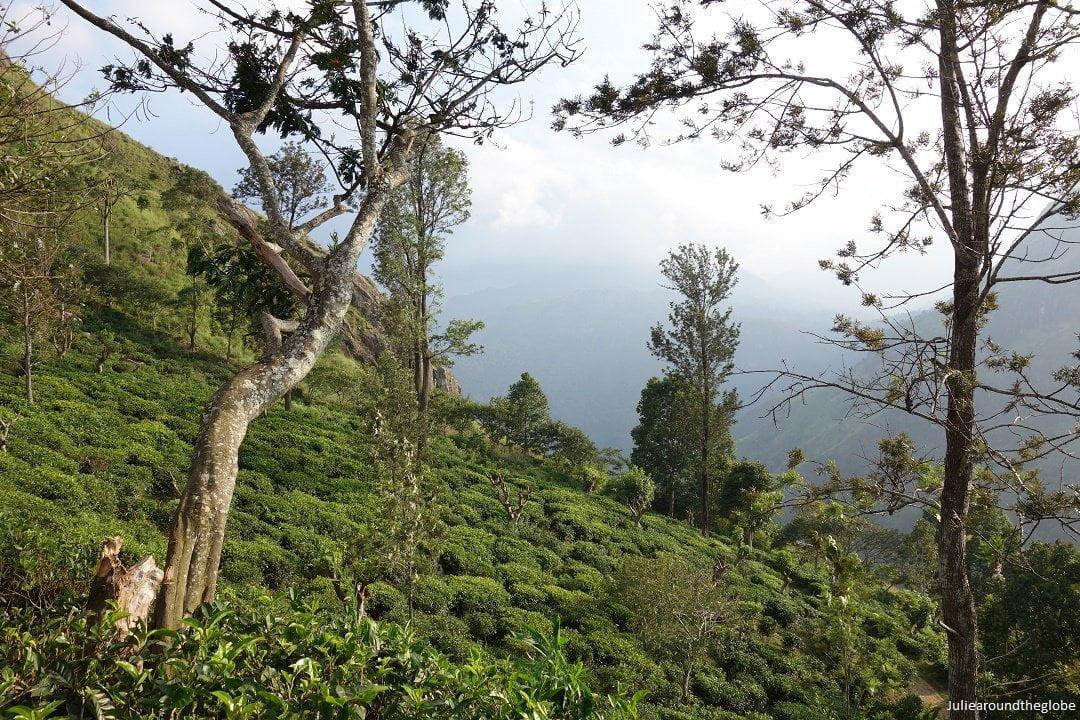 places to visit in Ella, Sri Lanka