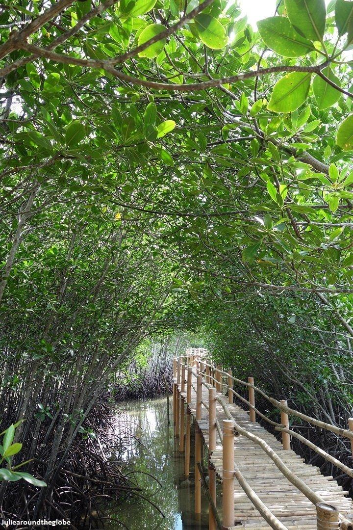 Obo-Ob mangrove sanctuary, Bantayan, Philippines 2