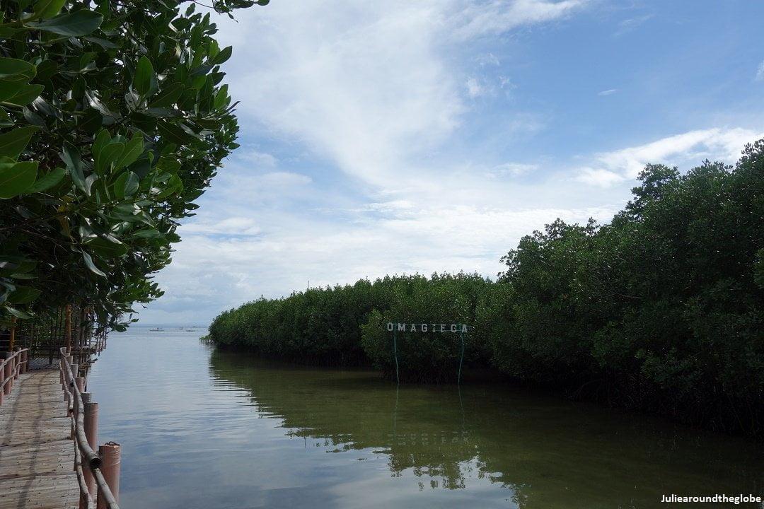 Obo-Ob mangrove sanctuary, Bantayan, Philippines