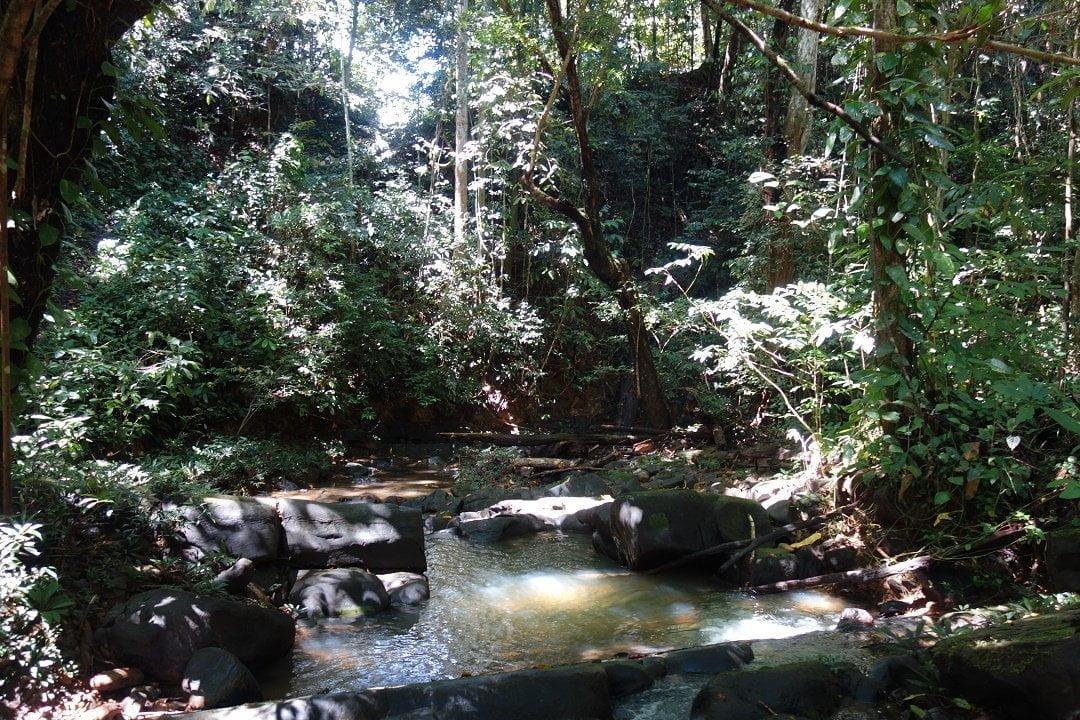 Jungle, Borneo