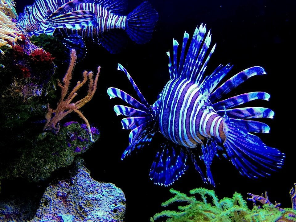 Lionfish, Places to visit in Cebu province