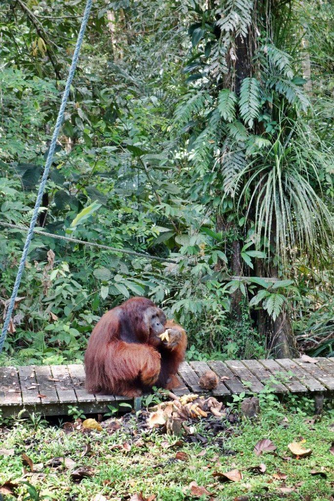 2 weeks Borneo Itinerary