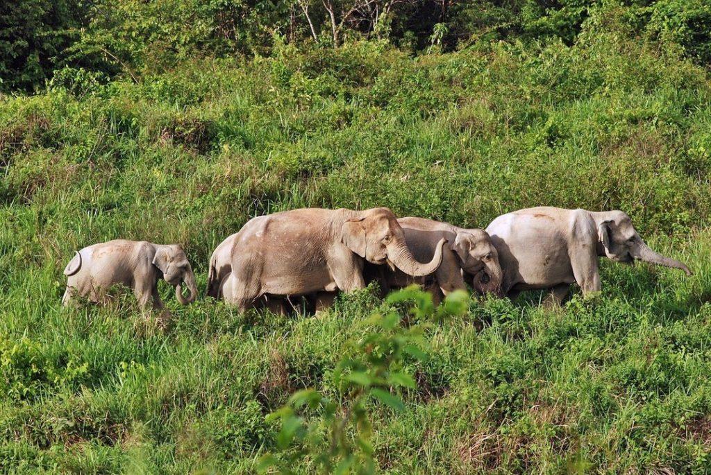 Kui Buri National Park, Thailand