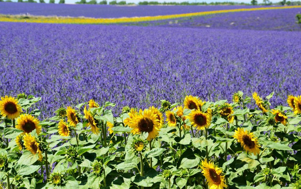 Valensole Plateau, France
