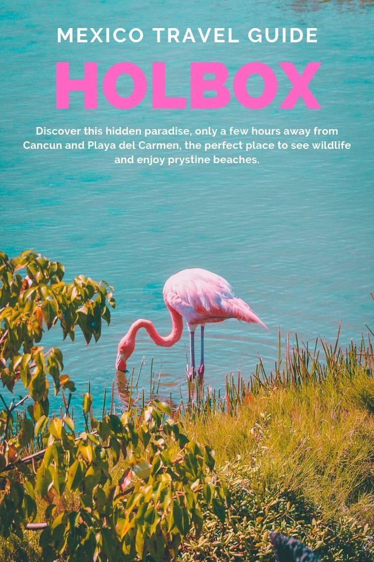 Discover the best things to do in Holbox, from snorkeling with whale sharks, seeing dolphins and flamingo to trekking to deserted beaches, this guide got you covered. #mexico #yucatan #wildlife #holbox