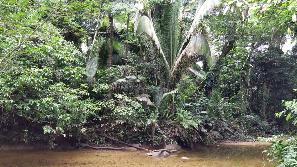 River and jungle in Cockscomb Basin Wildlife Sanctuary, Belize