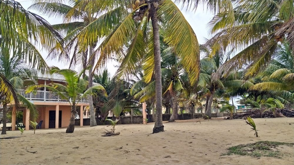 Beach and palmtrees in Hopkins, Belize