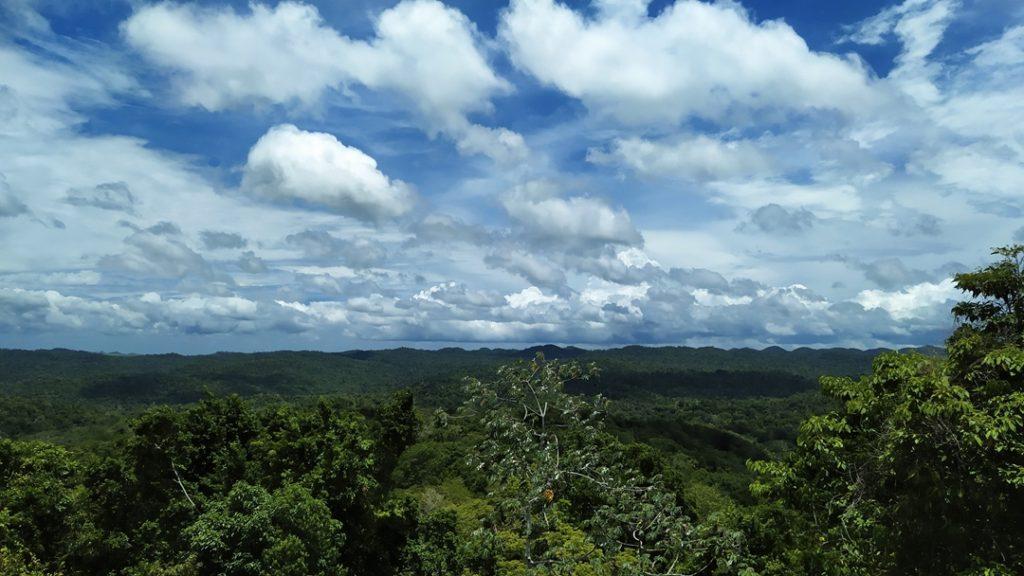 Jungle, rainforest, coracol, Belize