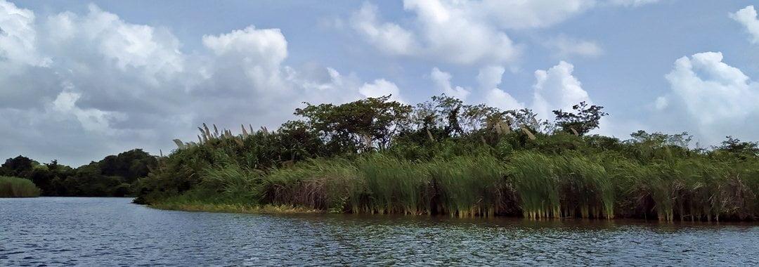 River monkey, Placencia, Belize