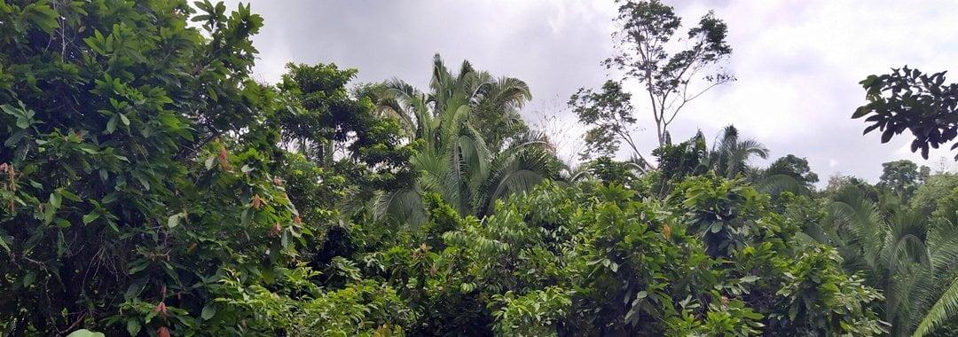 Jungle near San Antonio, Toledo, Belize