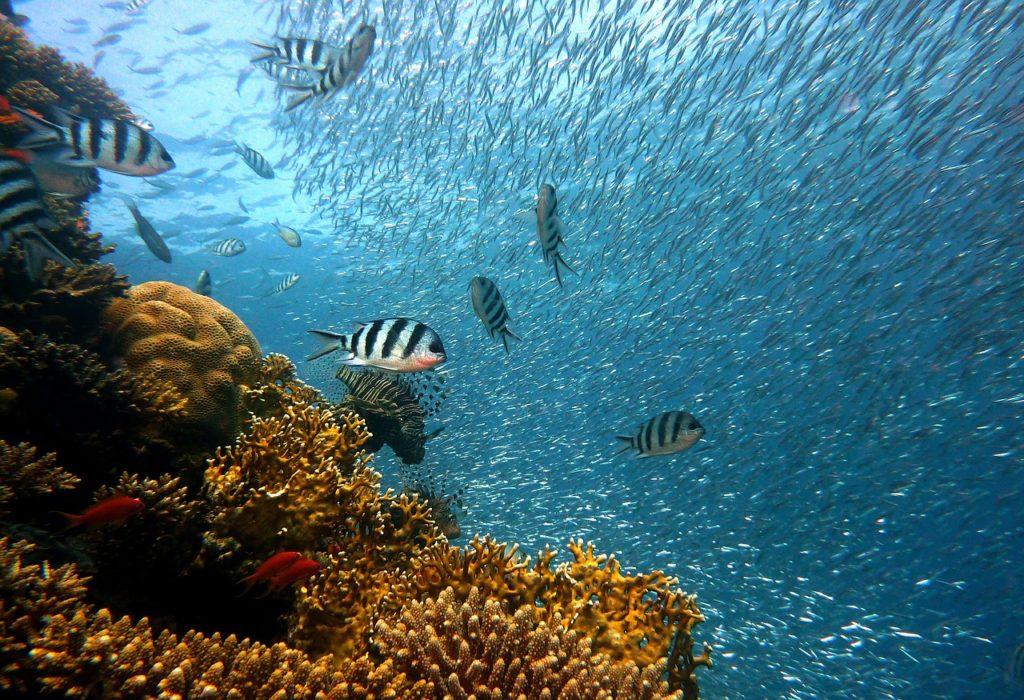 Reef, fish