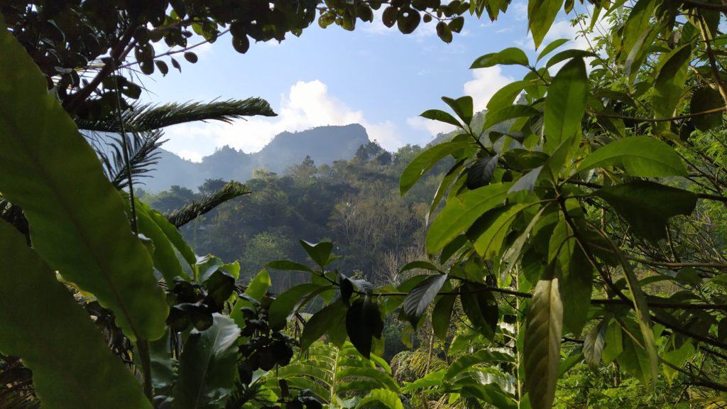 Guatemalan jungle