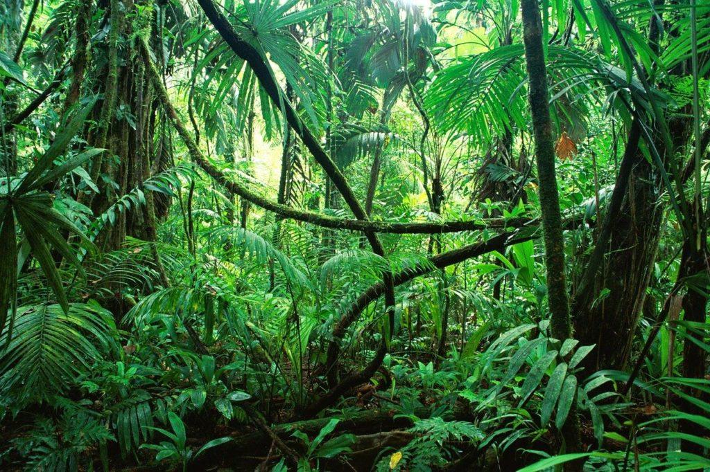 Chiapas' Jungle, popular destinations in Mexico