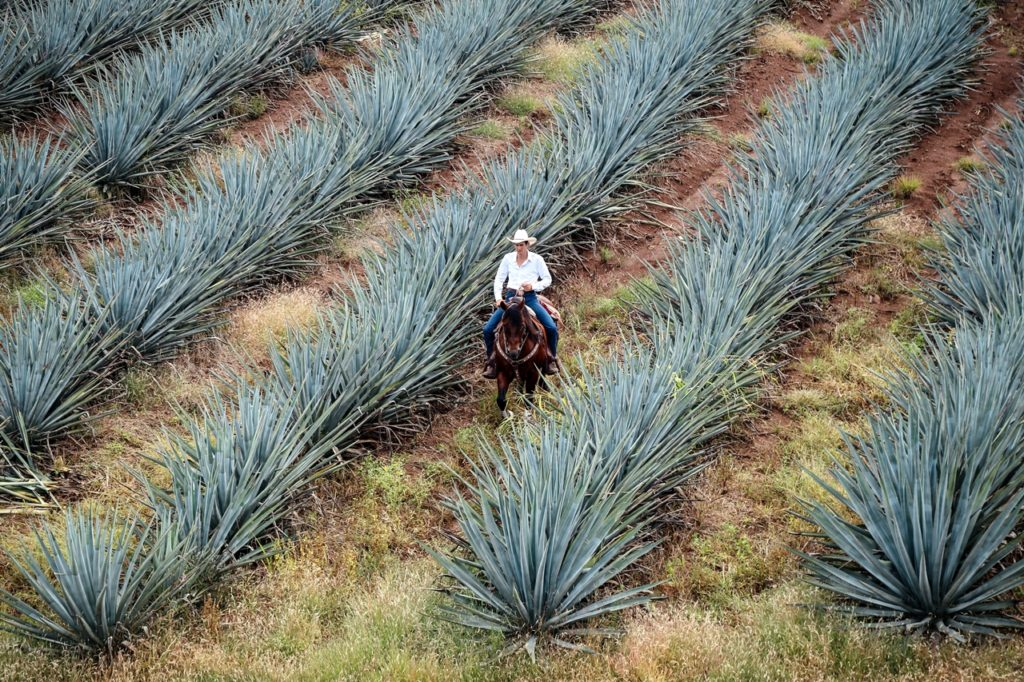 Tequila, popular Mexican destination