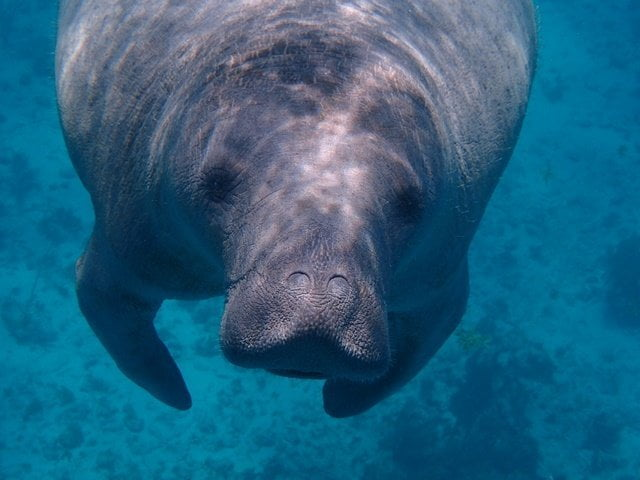 Manatee - Belize Packing List